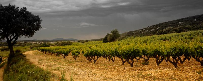 paysage - Caveau Tours et Terroirs d'Aniane